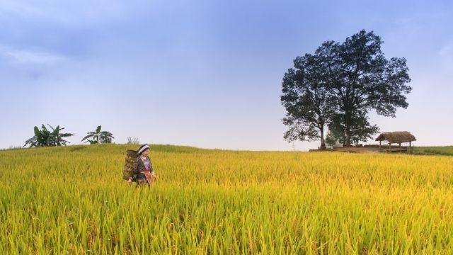 Economic Environment of India-chapter6-madhyamik geography
